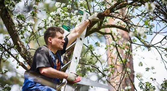 servicios y trabajos de arboricultura