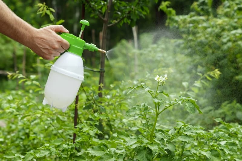 mejores insecticidas naturales para plantas para hacer en casa