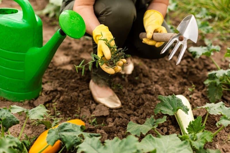 pasos para quitar y eliminar las malas hierbas para siempre