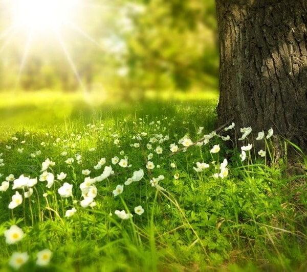 Los 10 árboles de crecimiento rápido más recomendados y que dan buena sombra