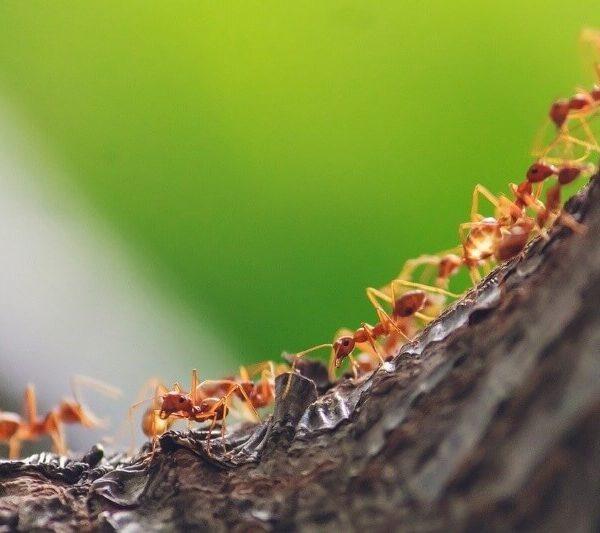¿Cómo eliminar las hormigas del jardín rápidamente?