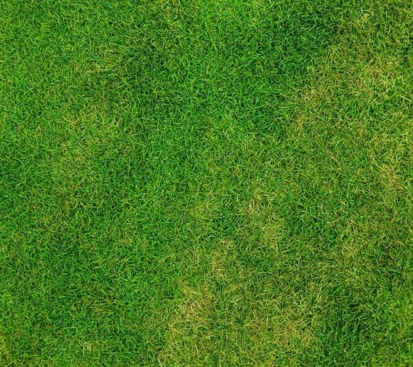 ¿Cuándo y cómo se debe abonar el césped de nuestro jardín?