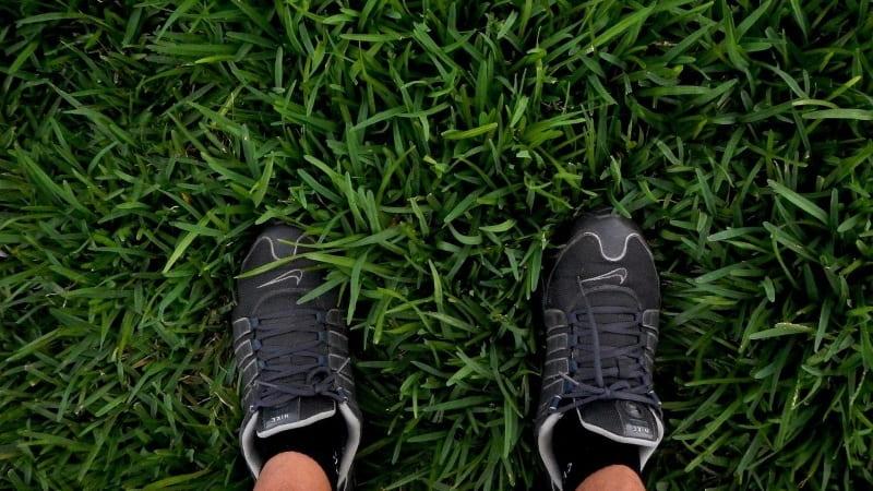 cuidados de la grama