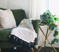 11 Consejos para cuidar tus plantas de interior