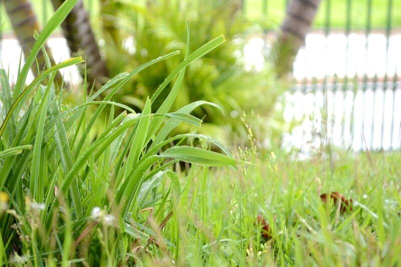 qué es la grama