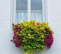 ¿Cuáles son las Mejores Plantas Colgantes de Exterior?