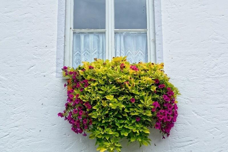 las mejores plantas colgantes de exterior