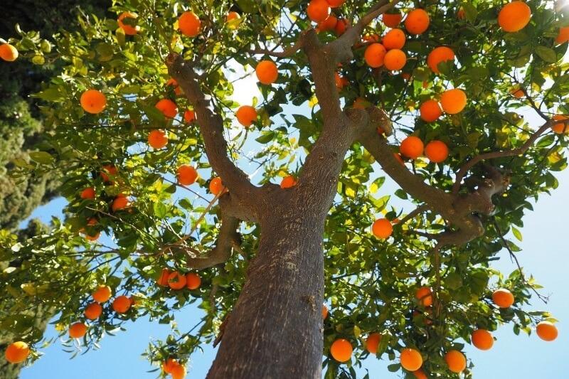9 Tipos de Árboles Frutales para el Jardín