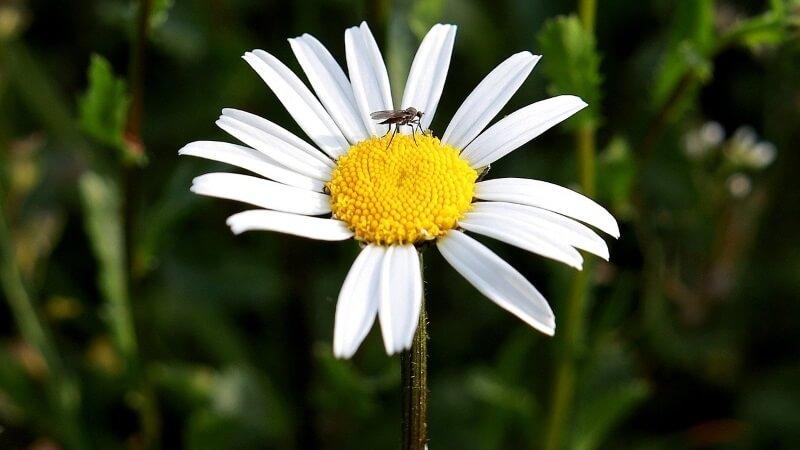 Consejos para eliminar mosquitos del jardín