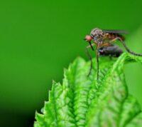 ¿Cómo Fumigar y Eliminar los Mosquitos del Jardín?