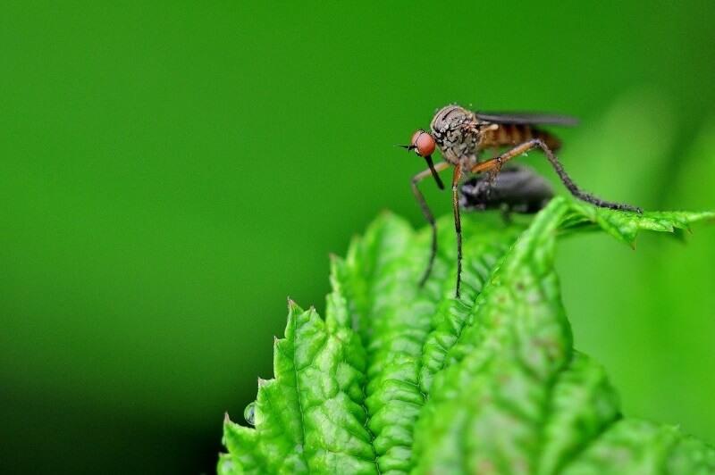 fumigar mosquitos del Jardín
